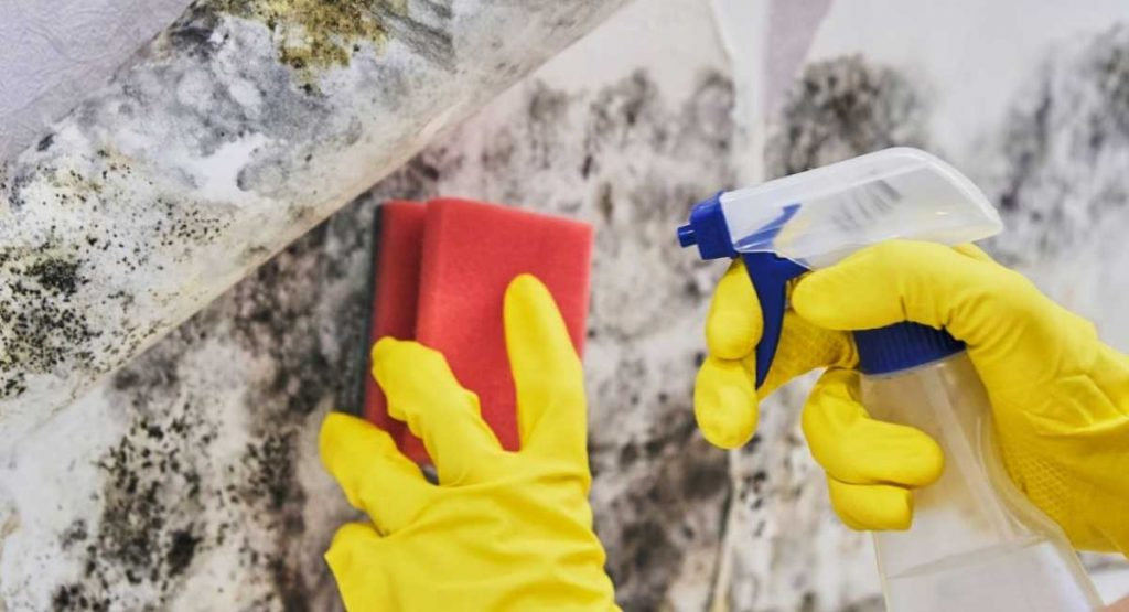Guide on How to Remove Mold from Wood